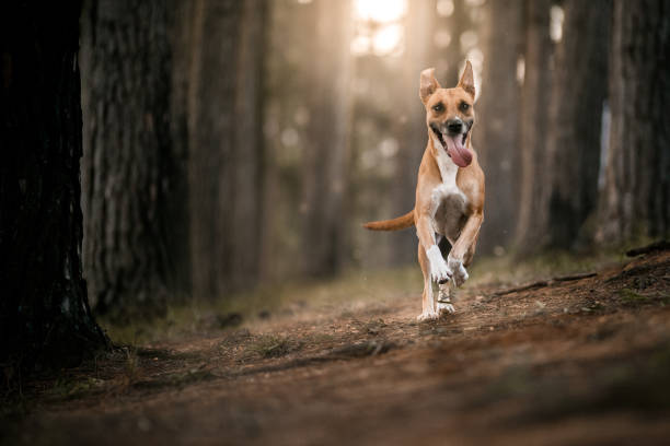 Causes Sound Sensitivity in Dogs